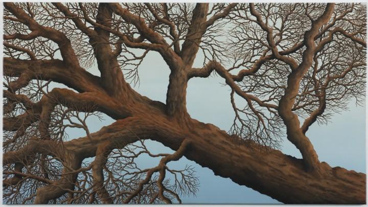 2012, Fallen Tree