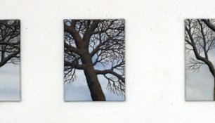 2012 - Trees 3 - Oil on canvas - 35 x 50 each